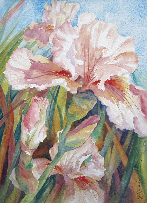 iris in bloom sold julie read. Black Bedroom Furniture Sets. Home Design Ideas